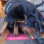 Dark Gypsy Kiya (mum) and Raine ( daughter)