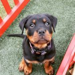 Levi Madeley puppies